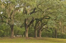 Trees in natchez trace parkway — Stock Photo