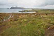 Пейзаж вдоль побережья, Ирландия — стоковое фото