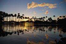 Силует дерева пальми — стокове фото