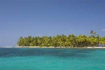 Пальмовые деревья вдоль зеленой воды — стоковое фото
