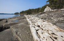 Weathered driftwood and rock formations — Stock Photo