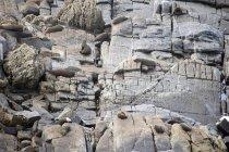 Уплотнения, прокладки на скалах — стоковое фото