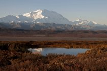 Mt. Mckinley With Reflection In Tundra Pond — Stock Photo