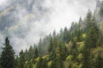Bäume in einem Wald in Wolke gehüllt — Stockfoto