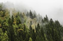 Forest shrouded in cloud — Stock Photo