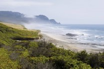 Fog along oregon coastline — Stock Photo