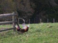 Vogelflug Einnahme — Stockfoto