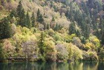 Безліч дерев в осінні — стокове фото