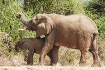 Elefante madre con bambino — Foto stock