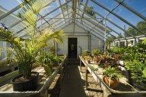 View Inside Greenhouse — Stock Photo