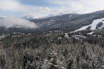 Сніг крита дерева в лісі — стокове фото