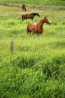 Лошади в высокой траве — стоковое фото