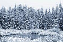 Lake water at winter — Stock Photo