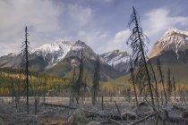 Mt. Vaux And Chancellor Peak — Stock Photo