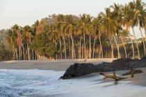 Пальм, камни и коряги на пляже — стоковое фото