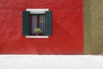 Квітковий горщик сидить у вікно — стокове фото