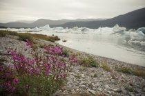Icebergs na baía com plantas — Fotografia de Stock