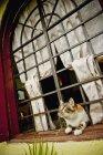Gato de rayas de tigre - foto de stock