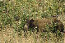 Медведь встает в полный рост — стоковое фото