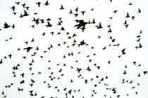 Birds Of Feather fliegen — Stockfoto
