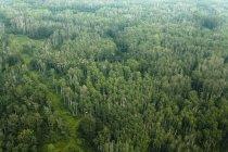 Poplar Forest e trilhas em cozinhar lago; Alberta, Canadá — Fotografia de Stock