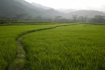 Landwirtschaftliche Flächen in Indonesien — Stockfoto