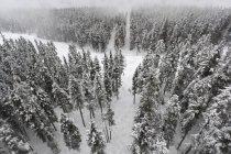 Alberi coperti di neve — Foto stock