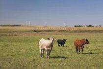 Ganadería en campo con turbinas de viento - foto de stock
