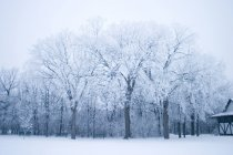 Park In Winter with trees in snow — Stock Photo