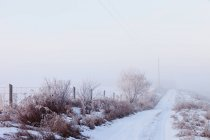 Snow Covered Rural Road — Stock Photo