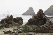 À deriva numa praia, Oregon — Fotografia de Stock
