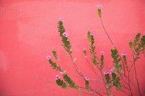 Planta con flores rosadas - foto de stock