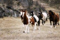 Коні скачущих у сфері — стокове фото