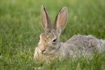 Coniglio seduto sull'erba — Foto stock