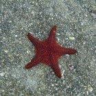 Красная звезда, лежащая на полу — стоковое фото