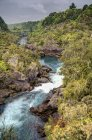Rapide del fiume Waikato — Foto stock