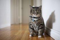 Кошка сидит в коридоре — стоковое фото