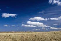 Campo erboso asciutto con Rolling Hills — Foto stock