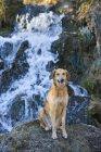 Mischling Hund — Stockfoto
