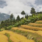 Distrito de Punakha Lowakha pueblo de Bhután - foto de stock