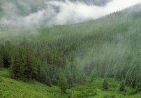 Hillside In Nebbia con foresta — Foto stock