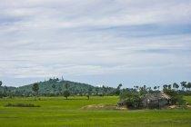 Wat сидить на вершині пагорба — стокове фото