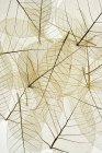 Слоистой прозрачные листья — стоковое фото