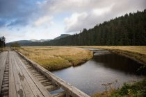 Wooden Boardwalk Leading Over River — Stock Photo