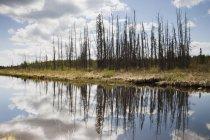 Ein ruhiger Fluss mit einem Spiegelbild der Bäume und Wolken — Stockfoto
