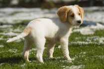 Puppy Playing In Snow — Stock Photo