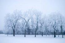 Park mit Bäumen im Winter — Stockfoto