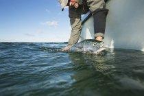 Rilasciando un false albacore presso la barca al largo della costa atlantica — Foto stock