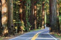 Strada asfaltata strada — Foto stock