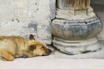 Sleeping dog on the street — Stock Photo
